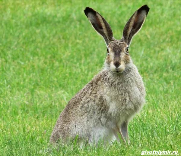 Охота-на-зайца-разными-способами-3