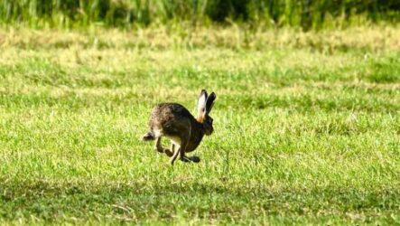 Охота на зайца разными способами