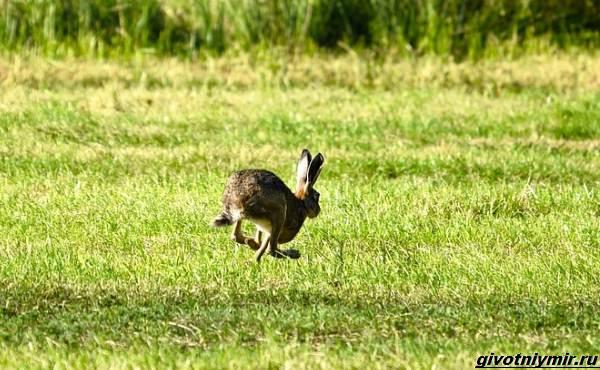 Охота-на-зайца-разными-способами-5