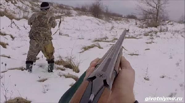 Охота-на-зайца-разными-способами-7