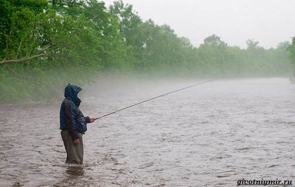 Погода-для-рыбалки-Как-влияет-и-в-какую-лучше-идти-на-рыбалку-1