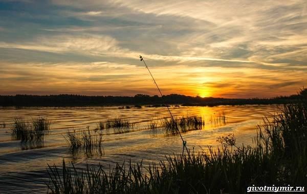 Погода-для-рыбалки-Как-влияет-и-в-какую-лучше-идти-на-рыбалку-10