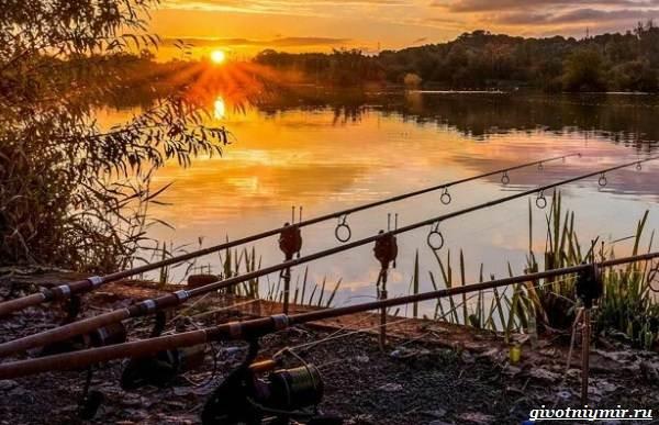 Погода-для-рыбалки-Как-влияет-и-в-какую-лучше-идти-на-рыбалку-2