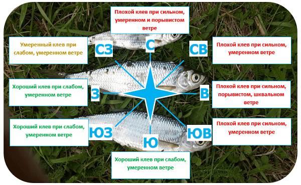 Погода-для-рыбалки-Как-влияет-и-в-какую-лучше-идти-на-рыбалку-3