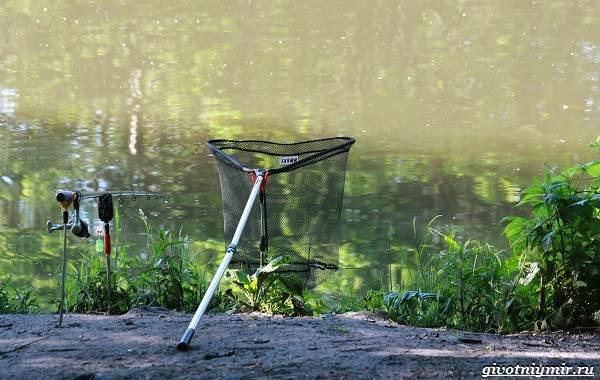 Погода-для-рыбалки-Как-влияет-и-в-какую-лучше-идти-на-рыбалку-6