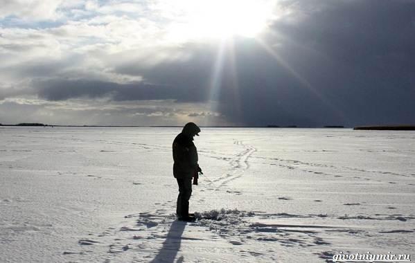 Погода-для-рыбалки-Как-влияет-и-в-какую-лучше-идти-на-рыбалку-7