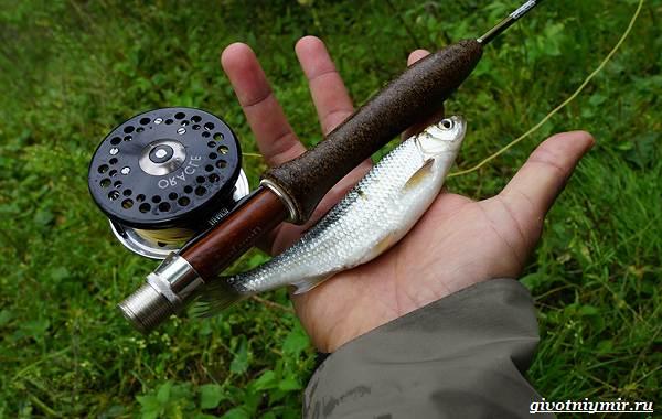 Рыбалка-на-ельца-по-открытой-воде-и-со-льда-1