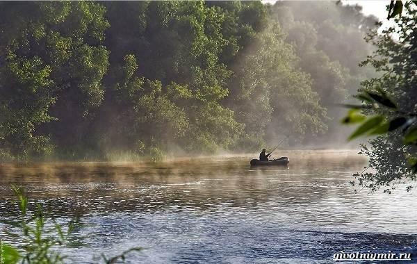 Рыбалка-на-ельца-по-открытой-воде-и-со-льда-4
