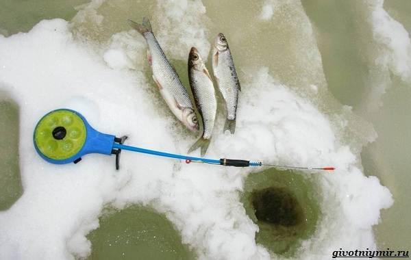 Рыбалка-на-ельца-по-открытой-воде-и-со-льда-8