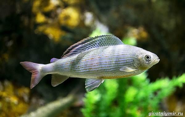 Рыбалка-на-хариуса-по-открытой-воде-и-со-льда-зимой-3