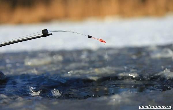 Рыбалка-на-карася-по-открытой-воде-и-со-льда-10