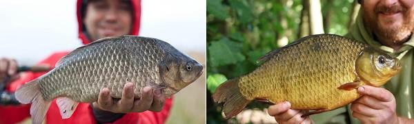 Рыбалка-на-карася-по-открытой-воде-и-со-льда-2