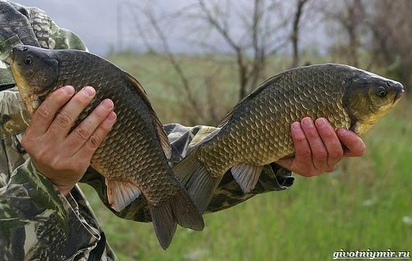 Рыбалка-на-карася-по-открытой-воде-и-со-льда-4