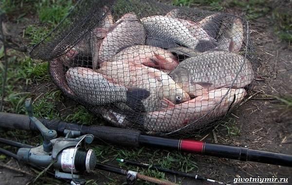 Рыбалка-на-карася-по-открытой-воде-и-со-льда-5