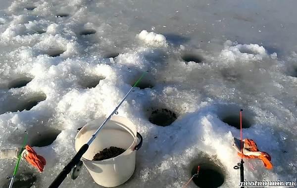 Рыбалка-на-карася-по-открытой-воде-и-со-льда-8