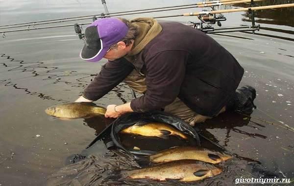 Рыбалка-на-линя-по-открытой-воде-и-со-льда-11-1