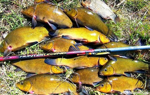 Рыбалка-на-линя-по-открытой-воде-и-со-льда-3