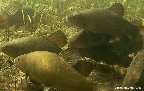 Рыбалка-на-линя-по-открытой-воде-и-со-льда-5
