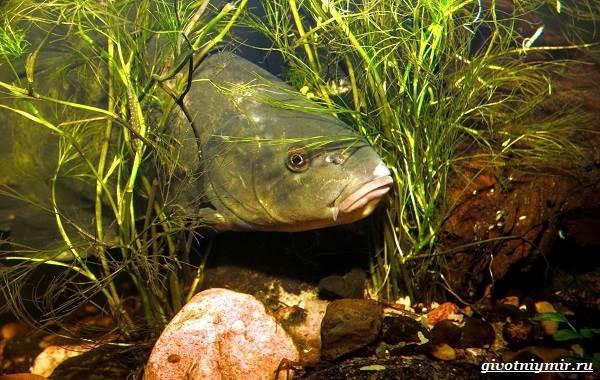 Рыбалка-на-линя-по-открытой-воде-и-со-льда-6