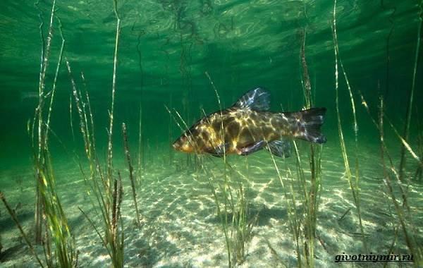 Рыбалка-на-линя-по-открытой-воде-и-со-льда-7