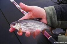 Рыбалка на плотву в разные сезоны и различными способами