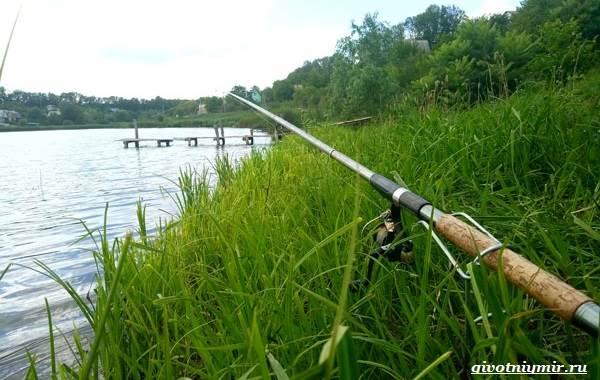 Рыбалка-на-плотву-в-разные-сезоны-и-различными-способами-16