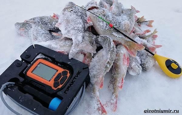 Рыбалка-на-плотву-в-разные-сезоны-и-различными-способами-21
