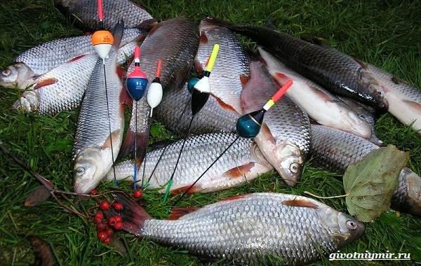 Рыбалка-на-плотву-в-разные-сезоны-и-различными-способами-9