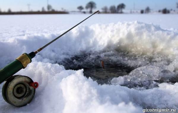 Рыбалка-на-сига-где-его-искать-какие-снасти-и-наживку-использовать-11