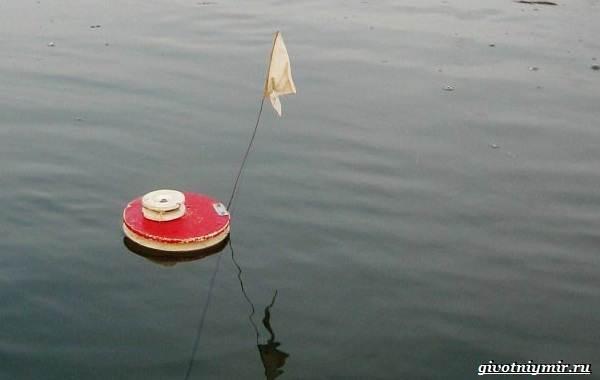 Рыбалка-на-сома-Где-его-искать-какую-использовать-наживку-и-снасти-10