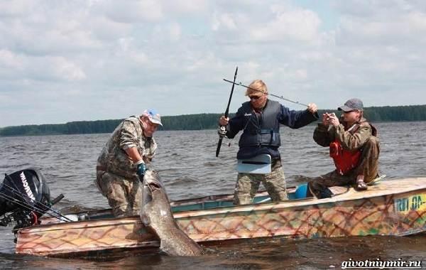 Рыбалка-на-сома-Где-его-искать-какую-использовать-наживку-и-снасти-13