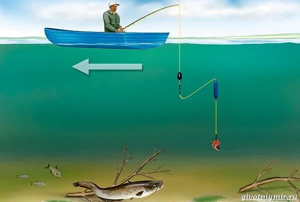 Рыбалка-на-сома-Где-его-искать-какую-использовать-наживку-и-снасти-3