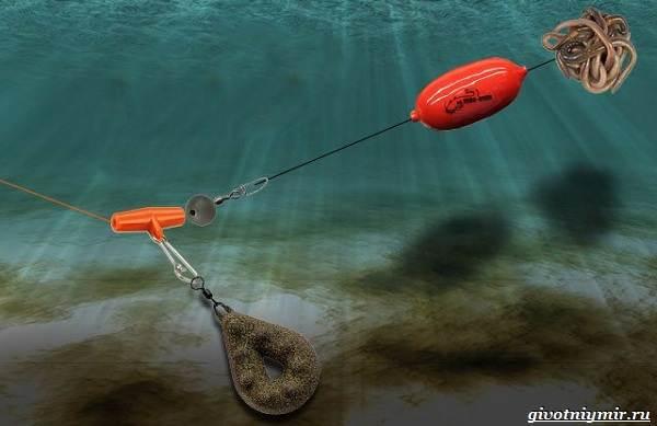 Рыбалка-на-сома-Где-его-искать-какую-использовать-наживку-и-снасти-7