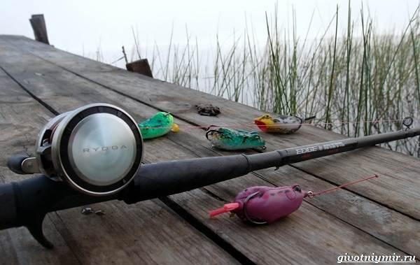 Рыбалка-на-сома-Где-его-искать-какую-использовать-наживку-и-снасти-8