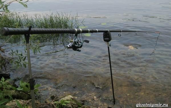 Рыбалка-на-сома-Где-его-искать-какую-использовать-наживку-и-снасти-9