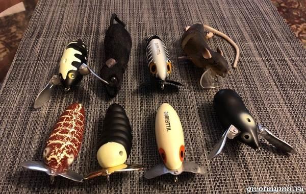Рыбалка-на-тайменя-по-открытой-воде-и-зимняя-ловля-11