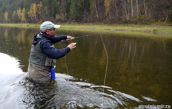 Рыбалка-на-тайменя-по-открытой-воде-и-зимняя-ловля-4