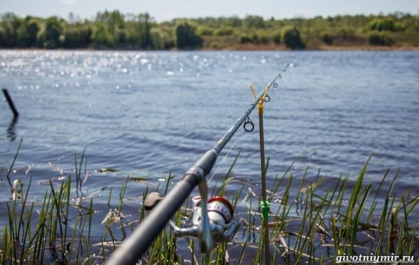 Рыбалка-на-язя-весной-и-летом-15
