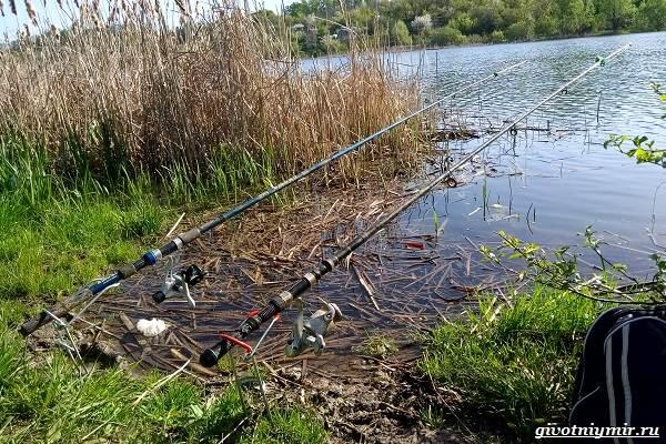 Рыбалка-на-язя-весной-и-летом-8
