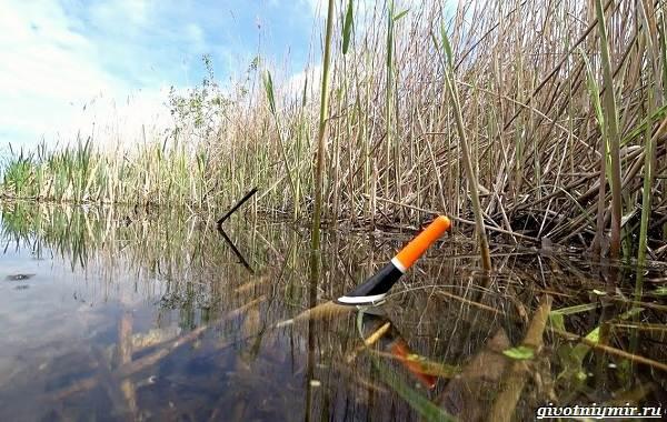 Рыбалка-на-язя-весной-и-летом-9