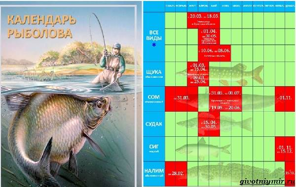 Рыболовный-календарь-особенности-рыбалки-в-декабре-18