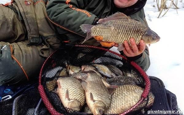 Рыболовный-календарь-особенности-рыбалки-в-декабре-4