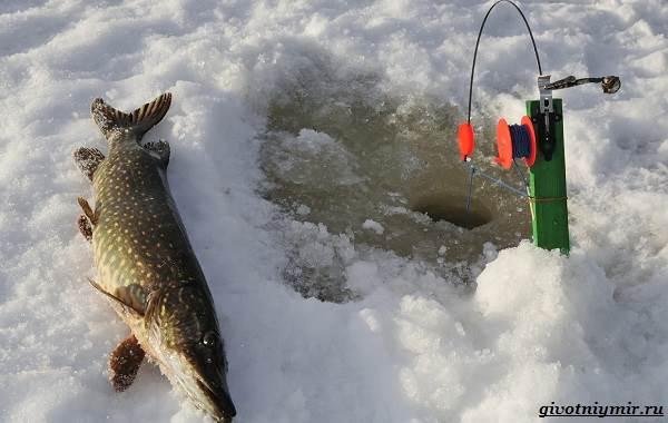 Рыболовный-календарь-особенности-рыбалки-в-декабре-6