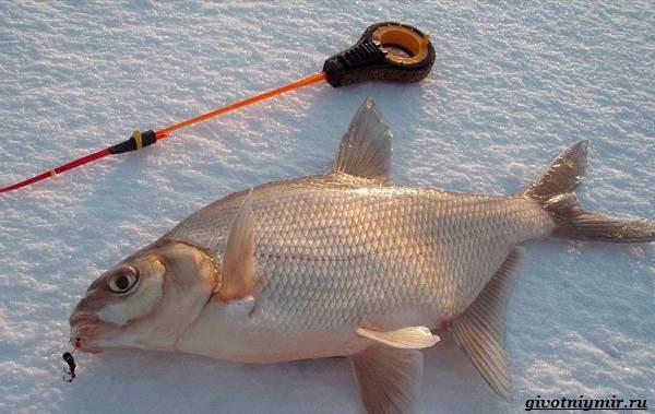 Рыболовный-календарь-особенности-рыбалки-в-декабре-8
