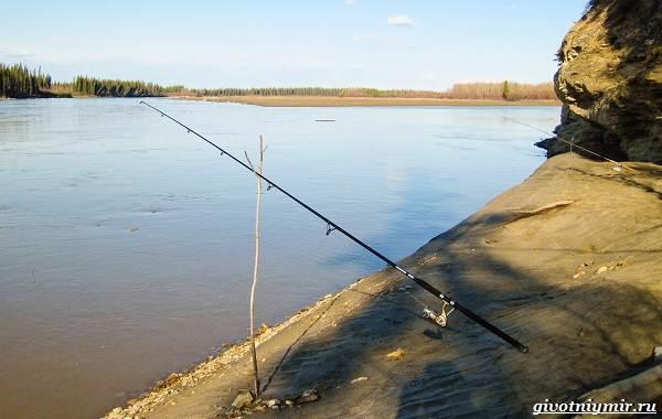 Зимняя-рыбалка-на-налима-где-искать-и-на-что-клюет-6