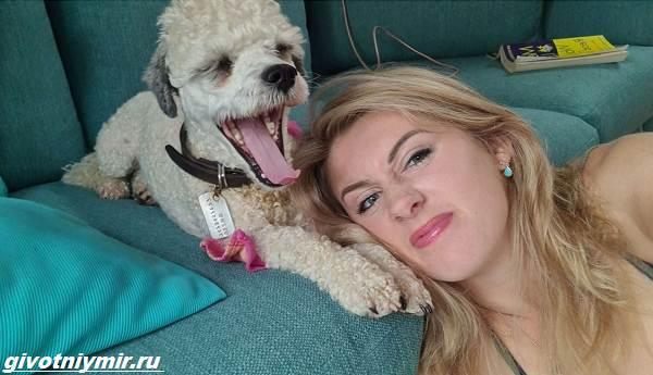 Истории-о-собаках-которых-забавно-раскрасили-2