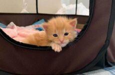 История о больном котёнке, который превратился в роскошного кота