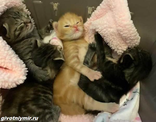 История-о-больном-котёнке-который-превратился-в-роскошного-кота-2