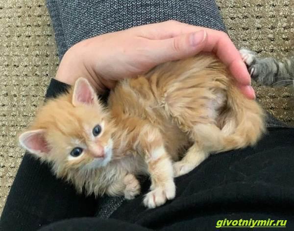 История-о-больном-котёнке-который-превратился-в-роскошного-кота-3
