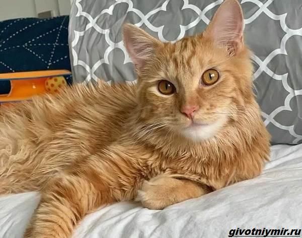 История-о-больном-котёнке-который-превратился-в-роскошного-кота-4